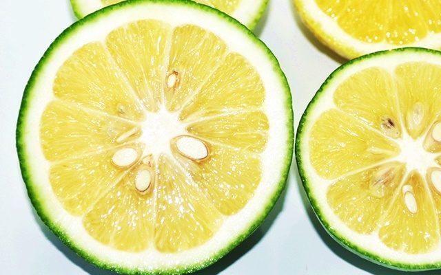 マイヤーレモンについて