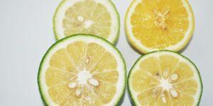 マイヤーレモンと一般的なレモンの違い